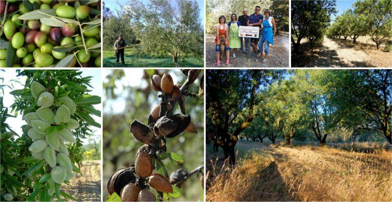Les Amandes et Olives du Mont Bouquet