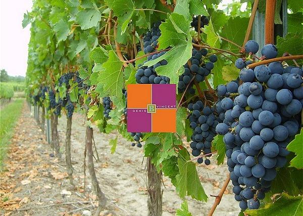 Promo vins du vignobles du Sourdour